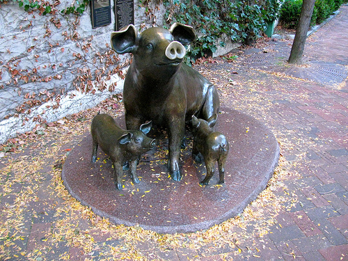 Pig Statue on College Ave