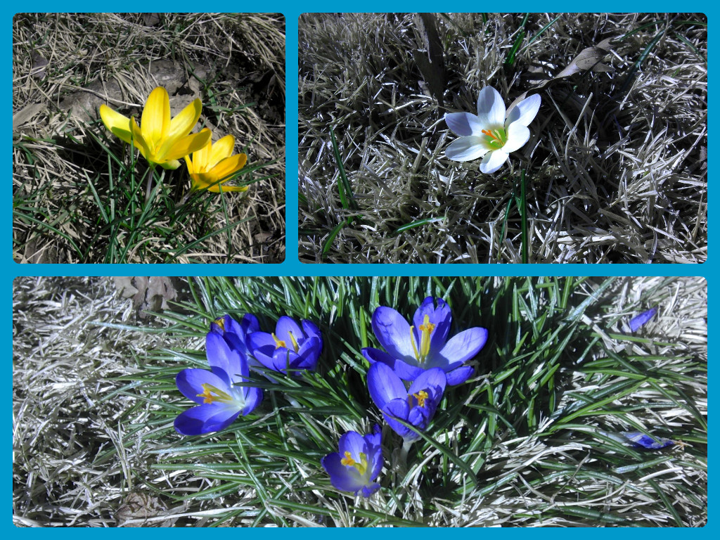 Flowers blooming marks the start of spring.