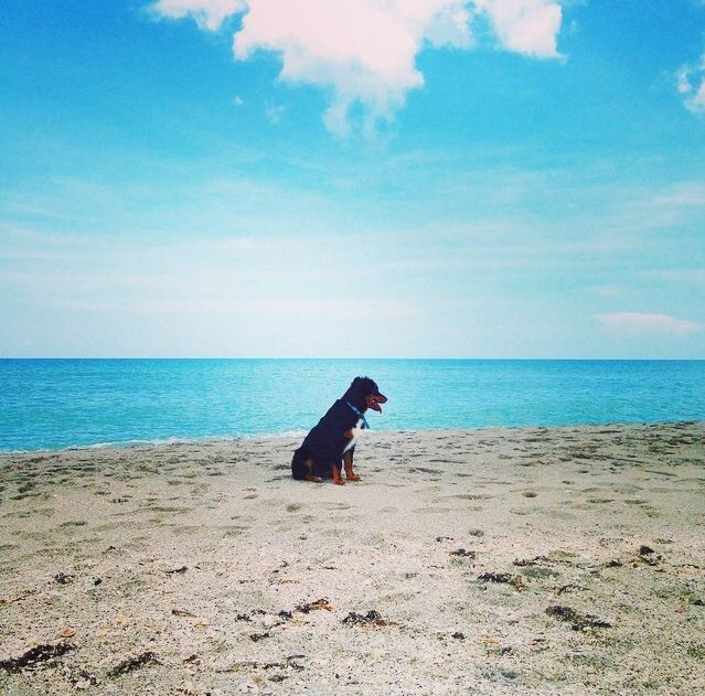 black dog sitting on a beach
