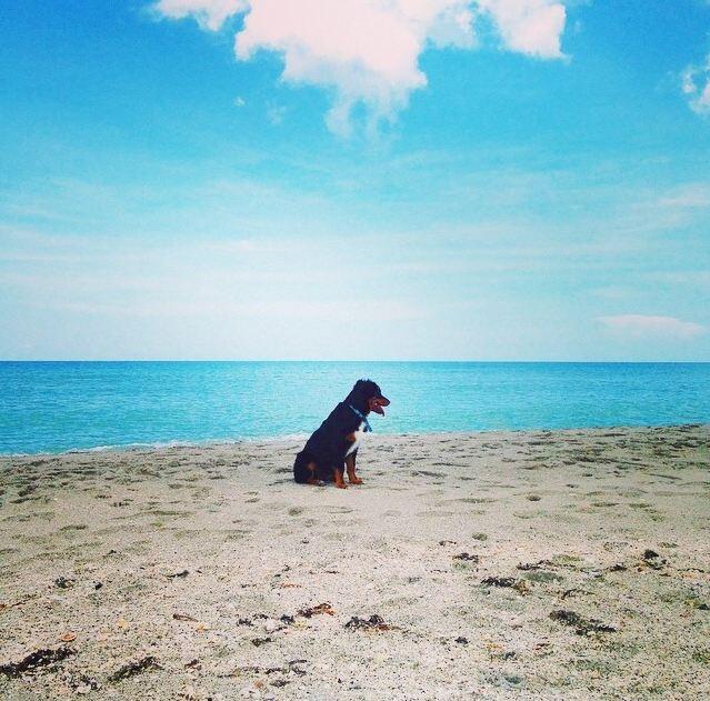 black dog sitting on a beach