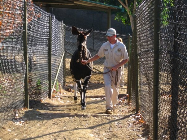 Zookeeper with okapi
